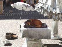 Street Performers Dog sleeping under an umbrella. A Street performers dog asleep in a basket under an umbrella in Salzburg Royalty Free Stock Images