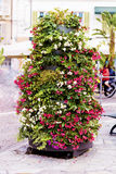 Street petunia flower decoration in Sanremo,Italy. Pots with flowers on sidewalk in Sanremo,Italy Royalty Free Stock Photography