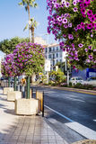Street  petunia flowers for decoration in Cannes,France Royalty Free Stock Photography