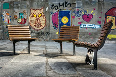 Street photography in Porto, Portugal. Cat and graffiti. Stock Images