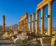Street of Pillars. The historic street of Pillars in old Palmyra Syria Stock Image