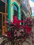 Street plant on the foreground and bright street of Havana royalty free stock photos
