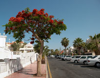 Street of Playa de las Americas Stock Photos