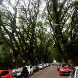 Street porto alegre city. Street porto alegre brasil trees nature urban árvores árvore rua calle street arborizada bonita sombra fresca folhas galhos troncos Stock Photo