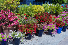 Street pot flowers decoration in Spain Royalty Free Stock Image
