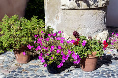 Street pot flowers decoration in Spain Royalty Free Stock Photography