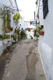 Street with potted plants. Street decorated with white houses and potted plants in their windows. It is situated in a village in Spain called Vejer de la Royalty Free Stock Images