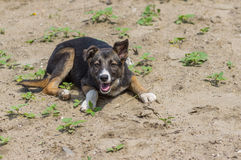 Street puppy having rest in a sandy place. Adorable street puppy having rest in a sandy place Royalty Free Stock Photo