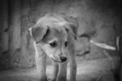 Street puppy looking for food. A hungry puppy walks around the city looking for food stock photography