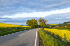 Street with rape field Royalty Free Stock Photography