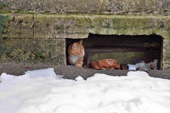 Street red cat fearfully gets out of the basement Stock Image