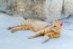Street red cat rests. On the street Stock Image