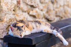 Street red cat sleeping. On the bench at the summertime afternoon Royalty Free Stock Photo