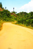 Street and Road. There are no cars on the road running and build roads through the forest Royalty Free Stock Images