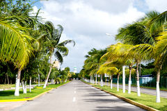 Street road or track with green palm trees, Cozumel, Mexico. Street road or car track with green palm trees sunny outdoor in summer Cozumel, Mexico on cloudy sky royalty free stock photography