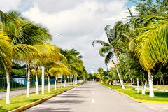 Street road or track with green palm trees, Cozumel, Mexico. Street road or car track with green palm trees sunny outdoor in summer Cozumel, Mexico on cloudy sky stock image