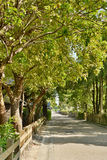 Street road with tree Stock Images