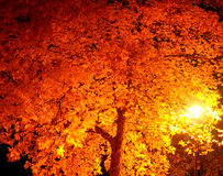 Street's lamp. Illuminate yellow leaves of tree at dark night stock photo