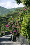 Street scene bequia Royalty Free Stock Images