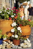 Street scene with flowering plants Royalty Free Stock Photography