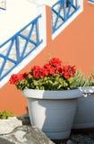 Street scene oia ia santorini greece. Street scene flowers and steps oia ia santorini cyclades greek islands Stock Photos