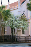 Street Scene Pink Church Charleston South Carolina Stock Photography