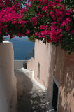 Street scene Santorini Greek Island. Street scene flowers overlooking Aegean sea in Santorini Thira Oia Greek Islands Greece Stock Photography