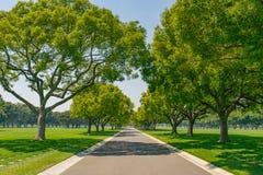 Street Shade Under  Trees Royalty Free Stock Photos