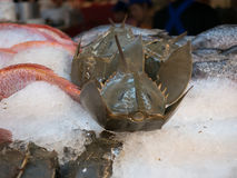 Street shop with fresh seafood Stock Images