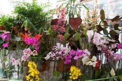 Street show-window of flower shop Stock Photos
