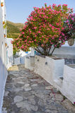 Street in Sifnos island, Cyclades, Greece Royalty Free Stock Photo