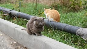 On the street sit two wild cold cats. Gray and red cat. stock video footage
