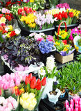 Street stall with variety of flowers Stock Photos