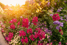 Street at sunset, decorated a flower bed with a variety of colors. Stock Photo