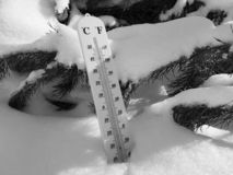 Street thermometer with a temperature of Celsius and Fahrenheit in the snow next to a young pine stock image