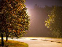 Street with tree in evening Stock Photography