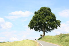 Street tree. Tree at small road in summer Stock Photos