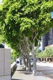 Street Trees Stock Photography