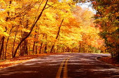A street with trees in autumn. A street with a forest of trees on both sides in autumn stock images