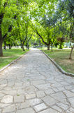 Street with trees on both sides. In pring Stock Photos