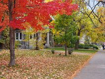 Street with trees in bright fall colors. Tree-lined residential street with trees in bright fall colors royalty free stock images