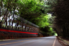 A street among trees with a motorcycle trace Stock Photos