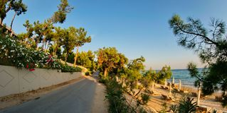 Street of trees. A picture of street of trees near a summer beach,in an area in Greece,Halkidiki,in a summer day afternoon Stock Image