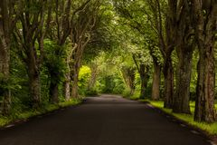 Street with trees in Sweden. Road to Valsterbo in Sweden near Malmo with beautiful colors Royalty Free Stock Photos