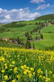 Street of Tuscany, Val d'Orcia Royalty Free Stock Photography