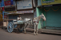 On the street in Varanasi, Uttar Pradesh. Royalty Free Stock Photo