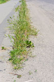 Street vegetation Stock Photos