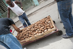 Street Vendor Selling Mamay Fruit Havana Cuba Royalty Free Stock Photography