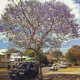 Street of vibrant purple jacaranda flowers on trees Stock Photo