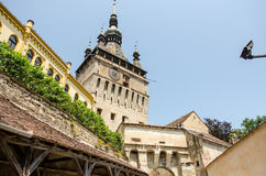 A street view of The Clock Tower in Sighisoara, Romania Royalty Free Stock Photo